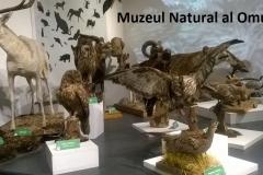 4 muzeul natural al omului (1) 3