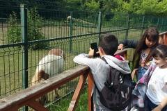 7 zoo (2)